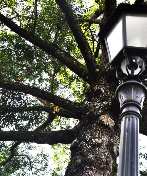 the tree and the lamp post