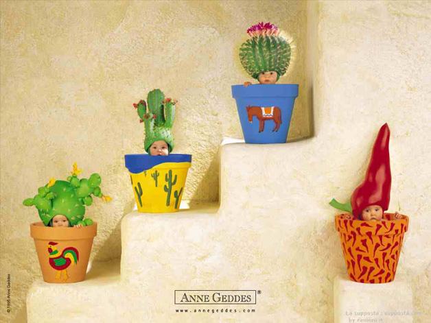 Cactus by Anne Geddes
